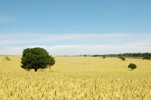 Countryside 12