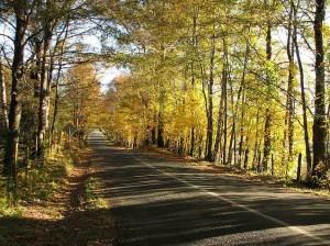 Roads 208